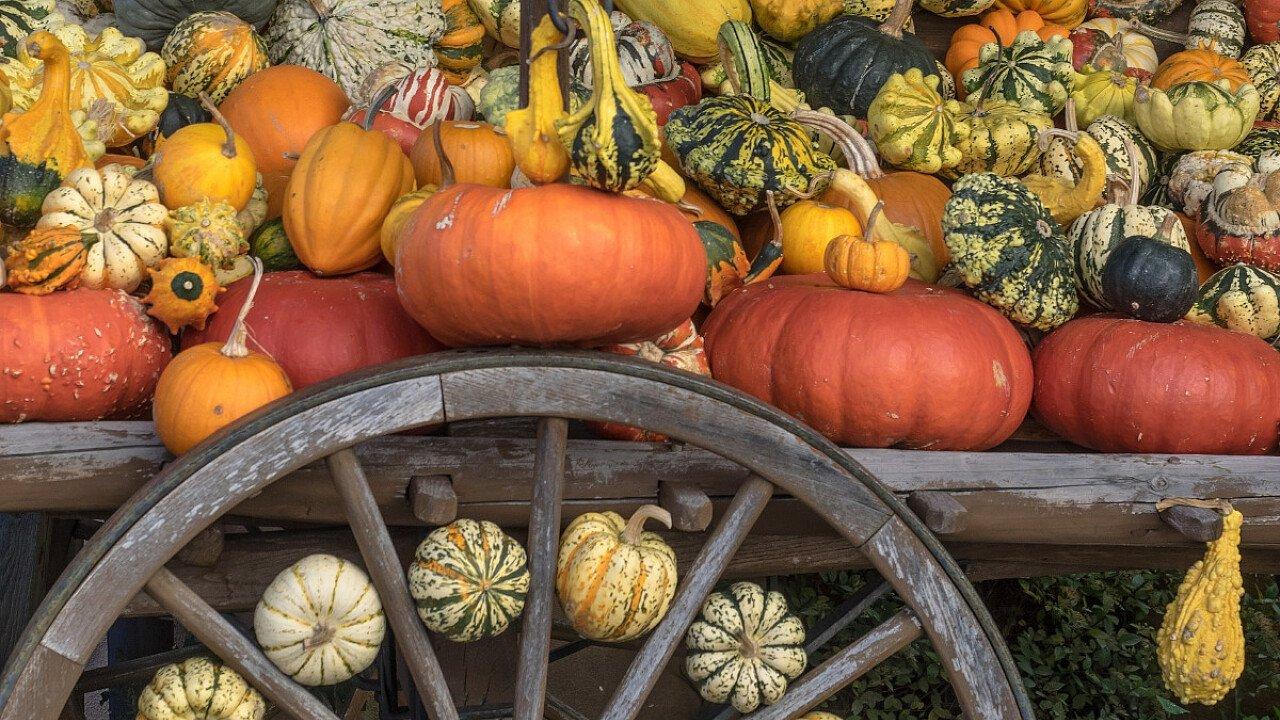 Le zucche: usate nella tradizione culinaria durante l'autunno e l'inverno