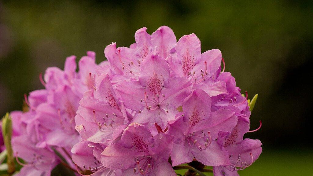 Flora of Natural Park Adamello-Brenta - cover