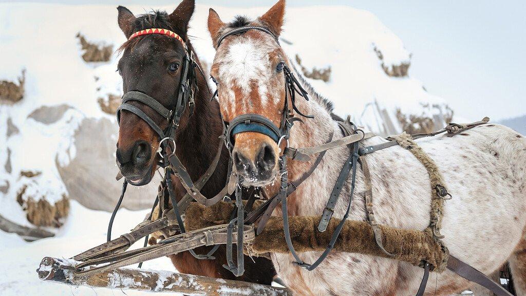Passeggiate ed escursioni a cavallo in Val di Zoldo - cover