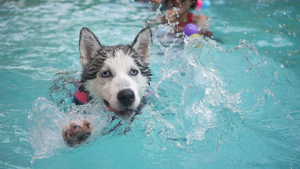 Valsugana Lagorai: vacanze pet friendly - cover