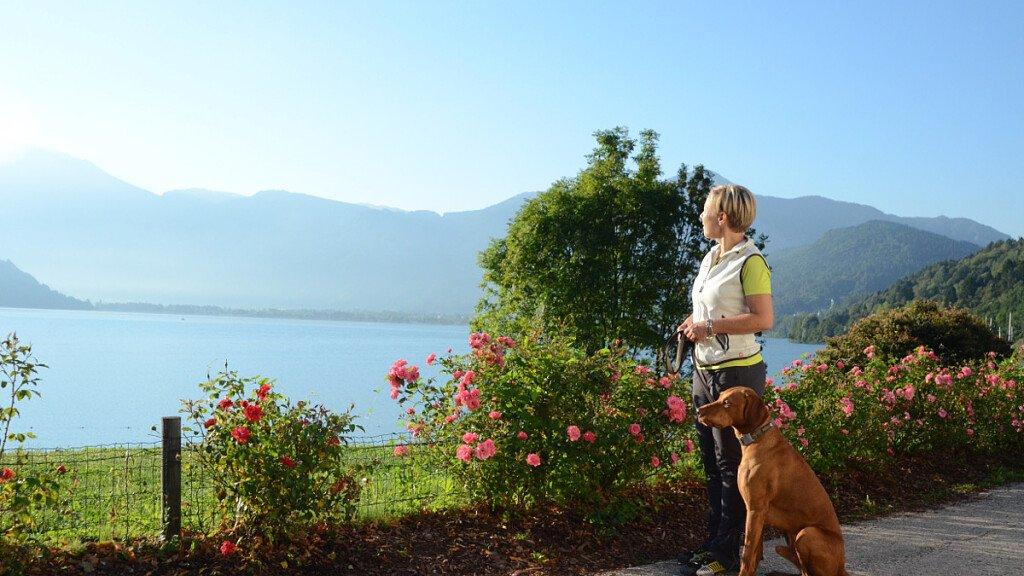 Trekking con il cane in Valsugana - cover