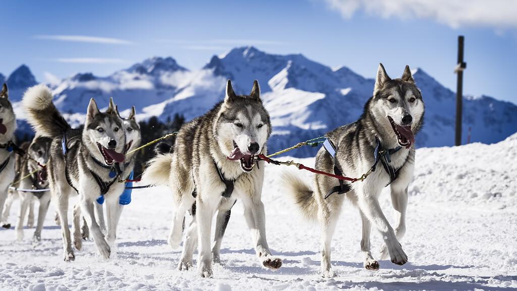 Vacanze a gennaio: dove andare e cosa fare sulle Dolomiti - cover