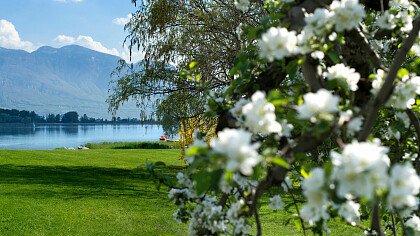 Mezza Maratona Lago di Caldaro - cover