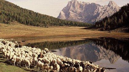 Verso l'Alpeggio - cover