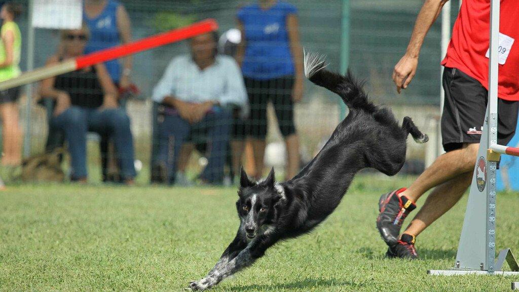 Agility Dog a Lavarone - cover
