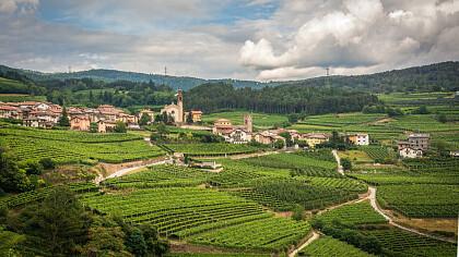 Rassegna e Concorso Vini Müller Thurgau - cover