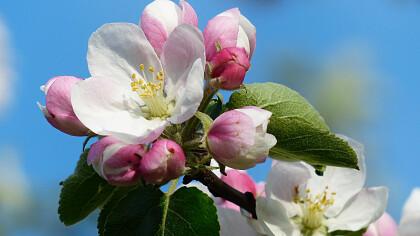 Scena in fiore - cover