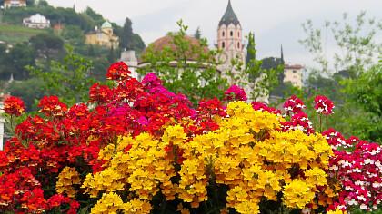 Merano Flower Festival - cover