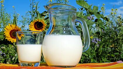 Latte in Festa Primiero - cover