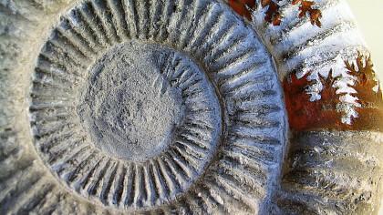 Visite guidate al sito archeologico di Mandriz - cover