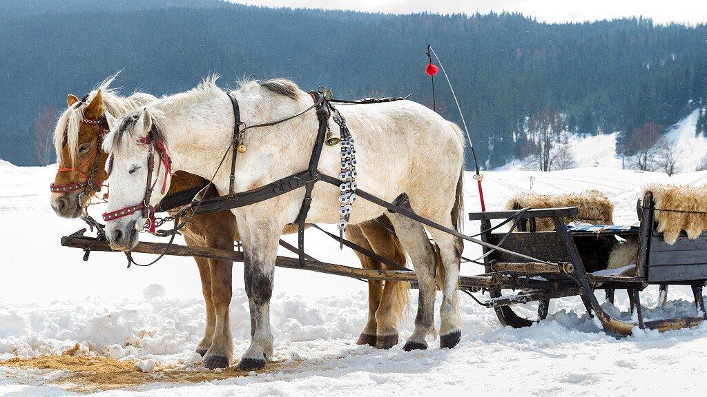 Trekking cavallo: Pian Cansiglio-Valmenera - cover