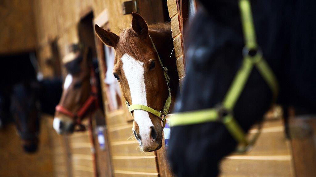 Trekking cavallo: Giro della Foresta del Cansiglio - cover
