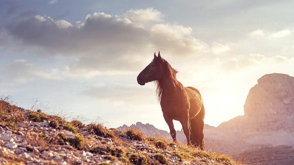 Horse trekking in Agordino: Valle di S. Pellegrino - cover