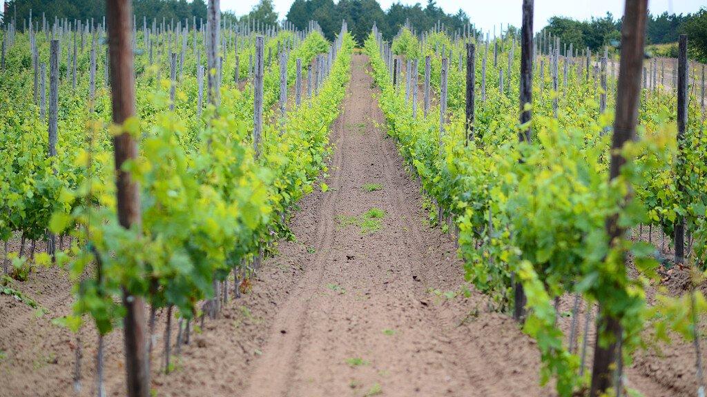 Strada del Vino e dei Sapori di Trento e Valsugana - cover