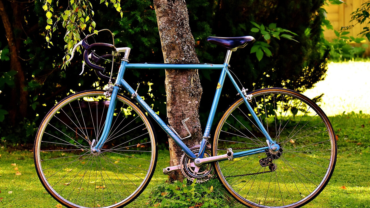Bici appoggiata su un albero