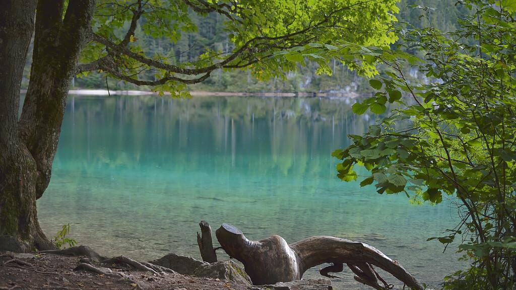 Passeggiate a Molveno: Molveno - Baita Ciclamino - cover