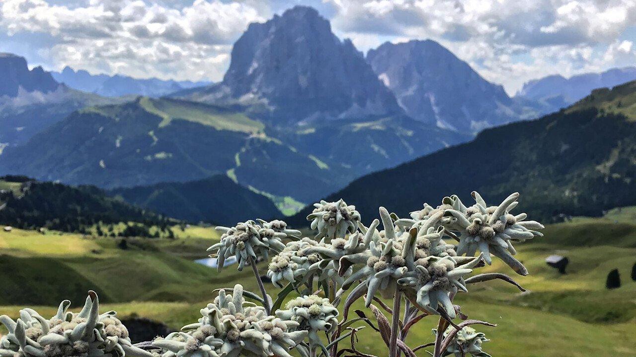 La natura incontaminata nelle Dolomiti patrimonio dell'UNESCO