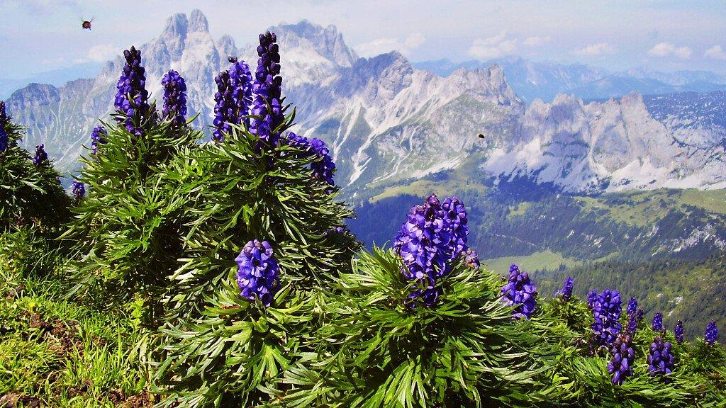 Le Dolomiti visibili su Google Street View - cover