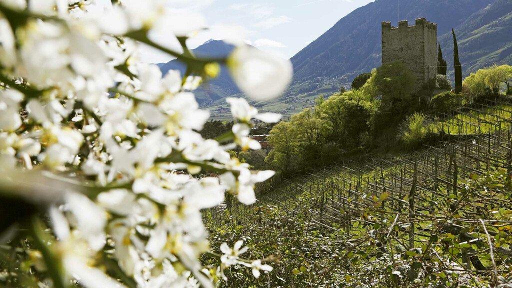 Al Merano WineFestival nasce l'idea del marchio Italia di Oscar Farinetti per EXPO 2015 - cover
