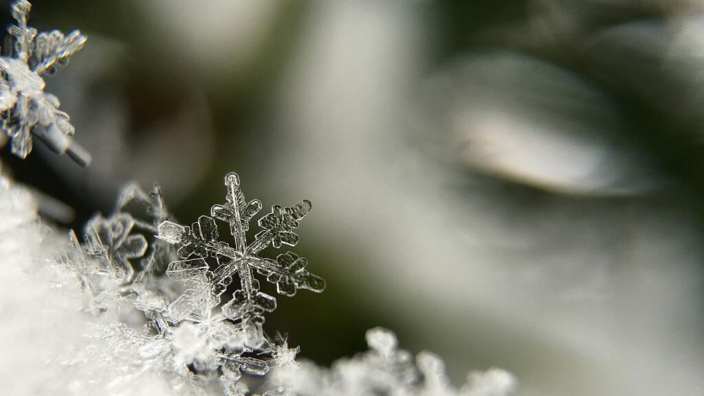 Il glossario della neve - cover