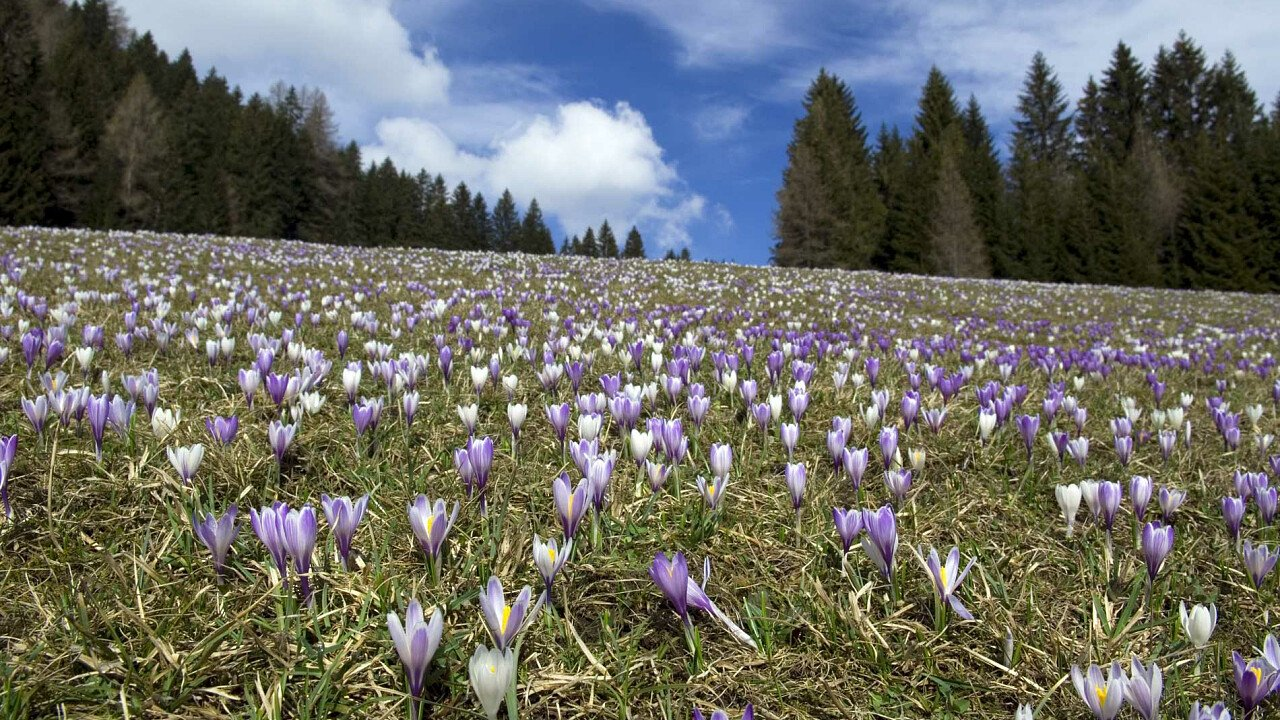 I prati fioriti della Val Comelico