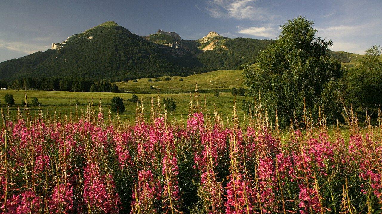 Primavera sul Monte Bondone