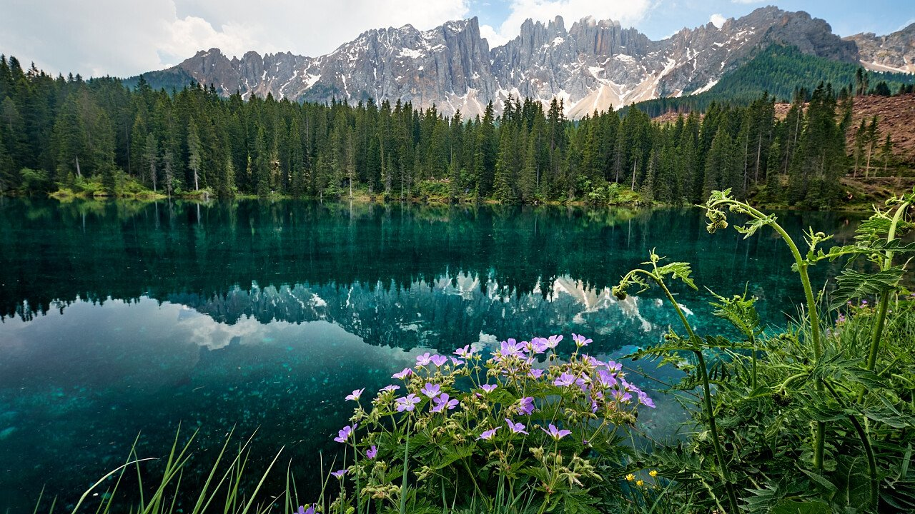 Flowers Carezza lake