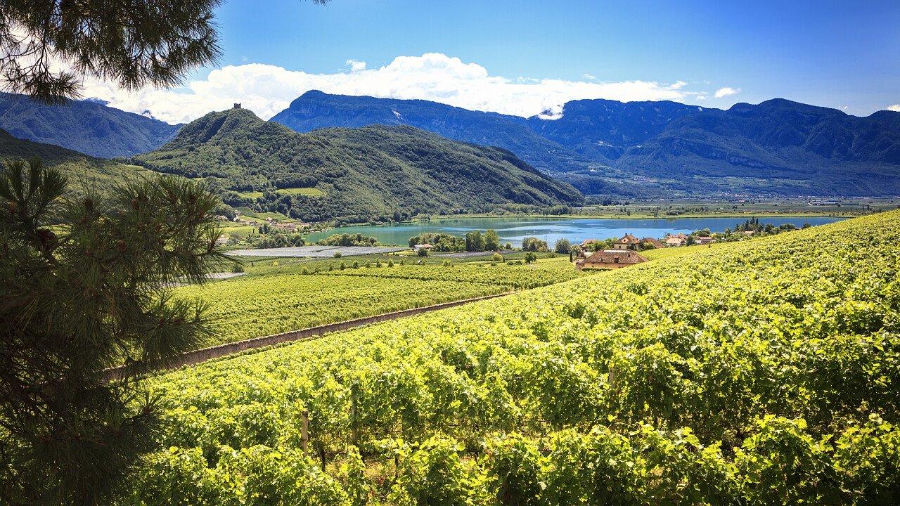 View of the vineyards of Caldaro lake