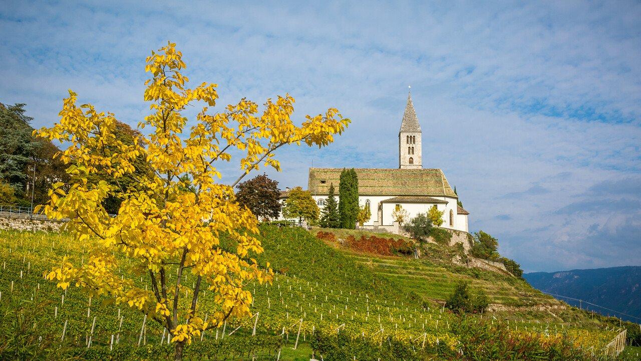 albero_vigne_chiesa_cortaccia_sulla_strada_del_vino_dreamstime_loren_image