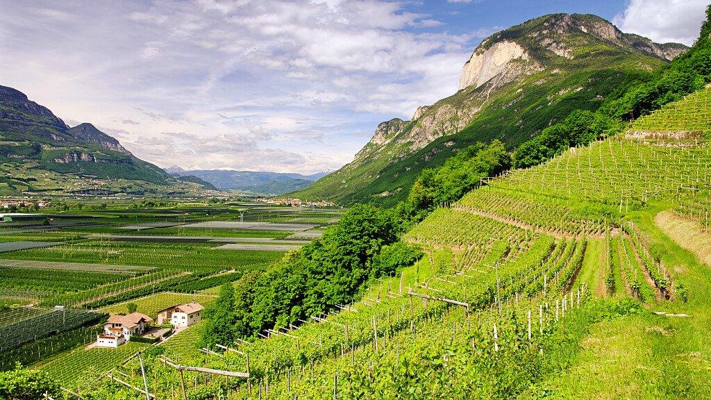 Salorno, a quiet wine village - cover
