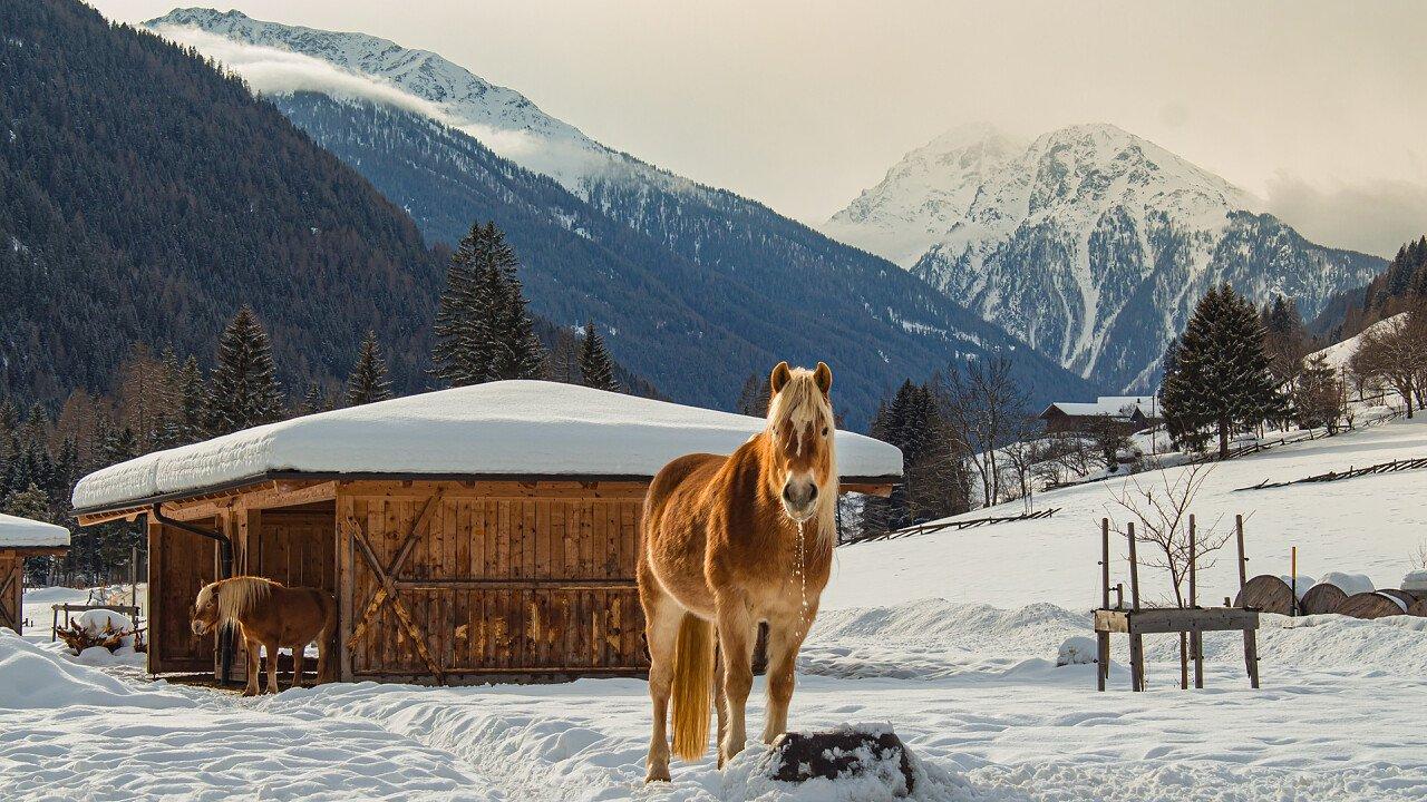 cavallo_inverno_val_d_ultimo_dreamstime_ebilena69