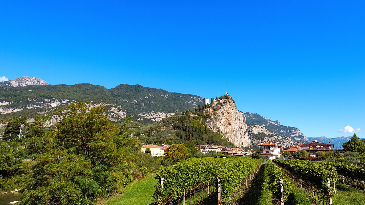Weinberge in Arco