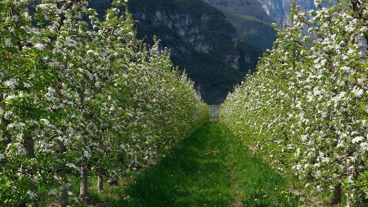 Meleti in primavera a Sarnonico