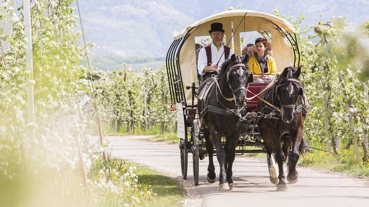 gita_in_carrozza_terlano_azienda_di_soggiorno_e_turismo_bolzano_spargelwirte.it_marion_lafogler