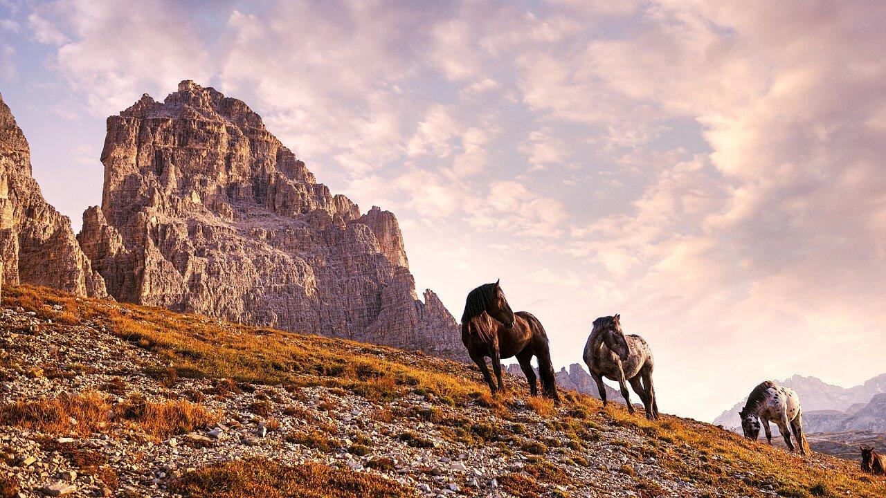 cavalli_dolomiti_auronzo_di_cadore_depositphotos