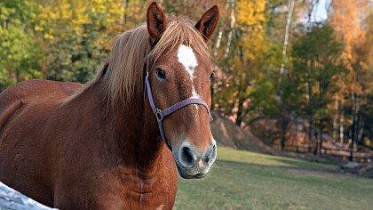 cavallo_di_avelengo_shutterstock
