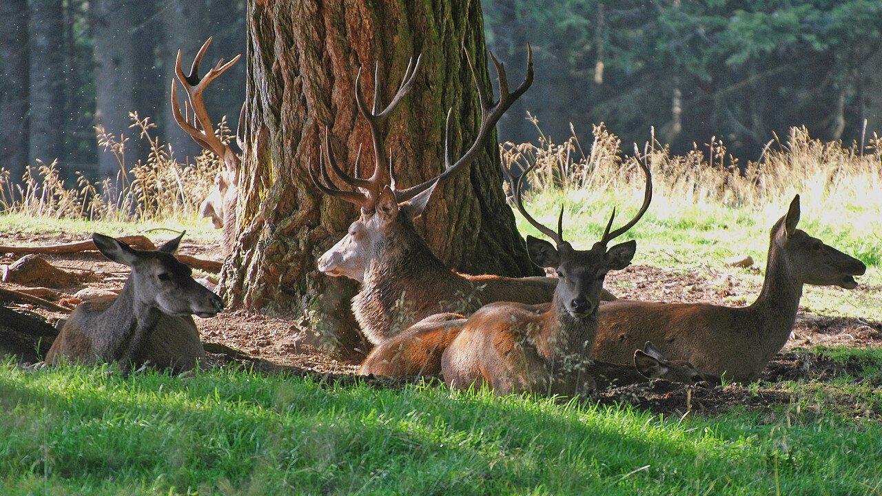 cervi_parco_naturale_predazzo_shutterstock