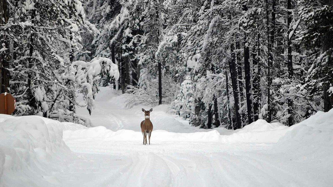 Cerbiatto nella natura invernale