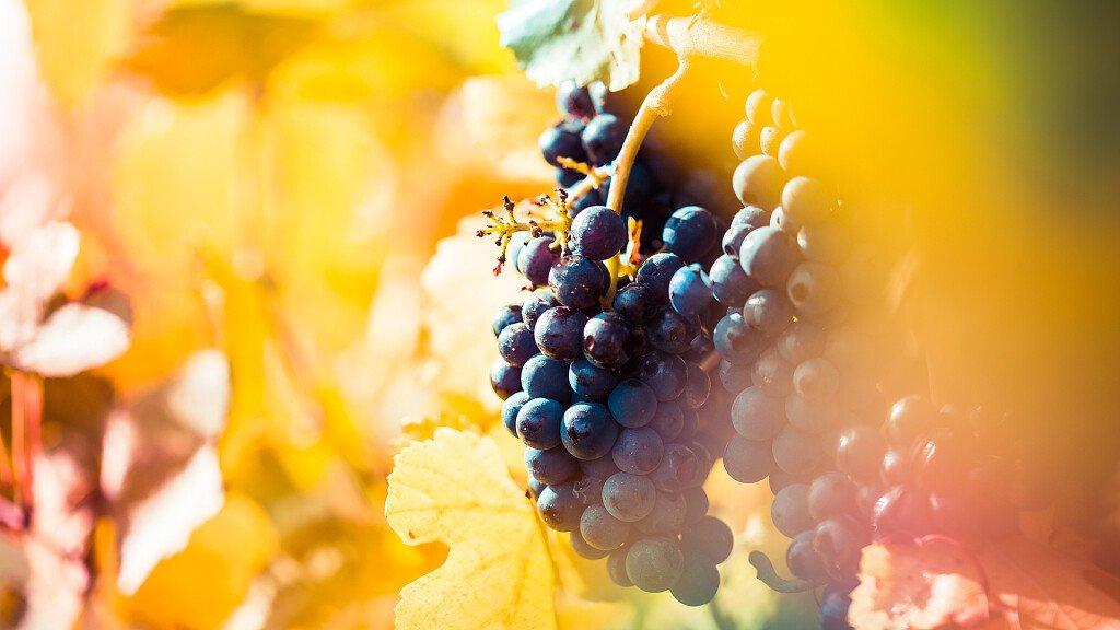 Vini e cantine delle Dolomiti - cover