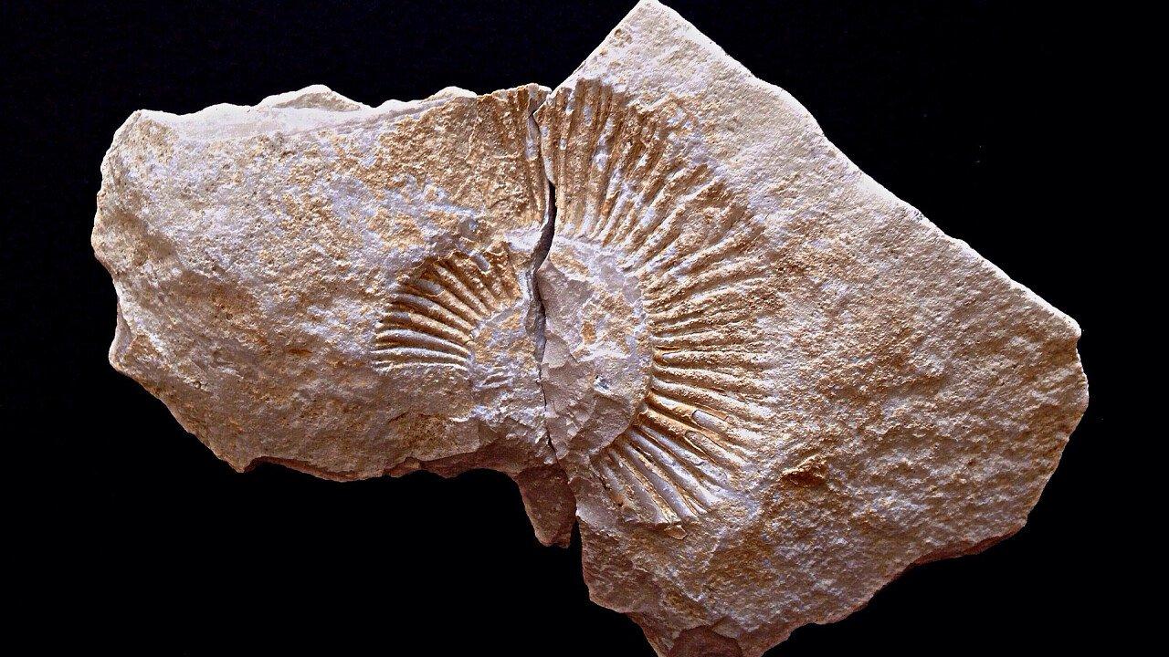 ammonite_fossile_pixabay