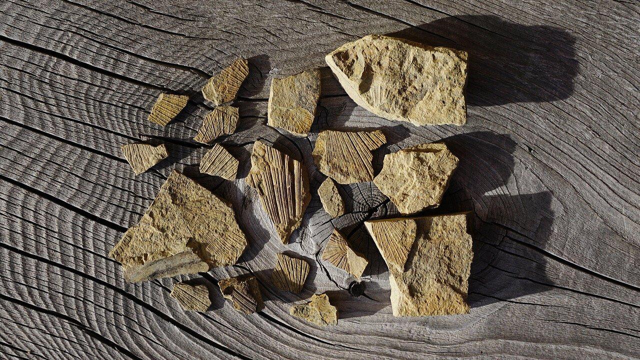 resti_fossili_pixabay