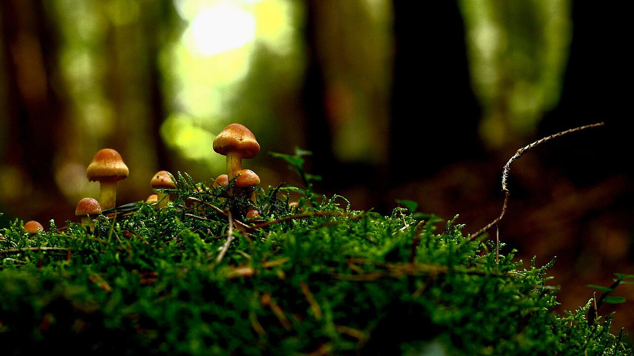 funghi_nel_bosco_pixabay