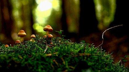 funghi_finferli_dentro_cestini_pixabay