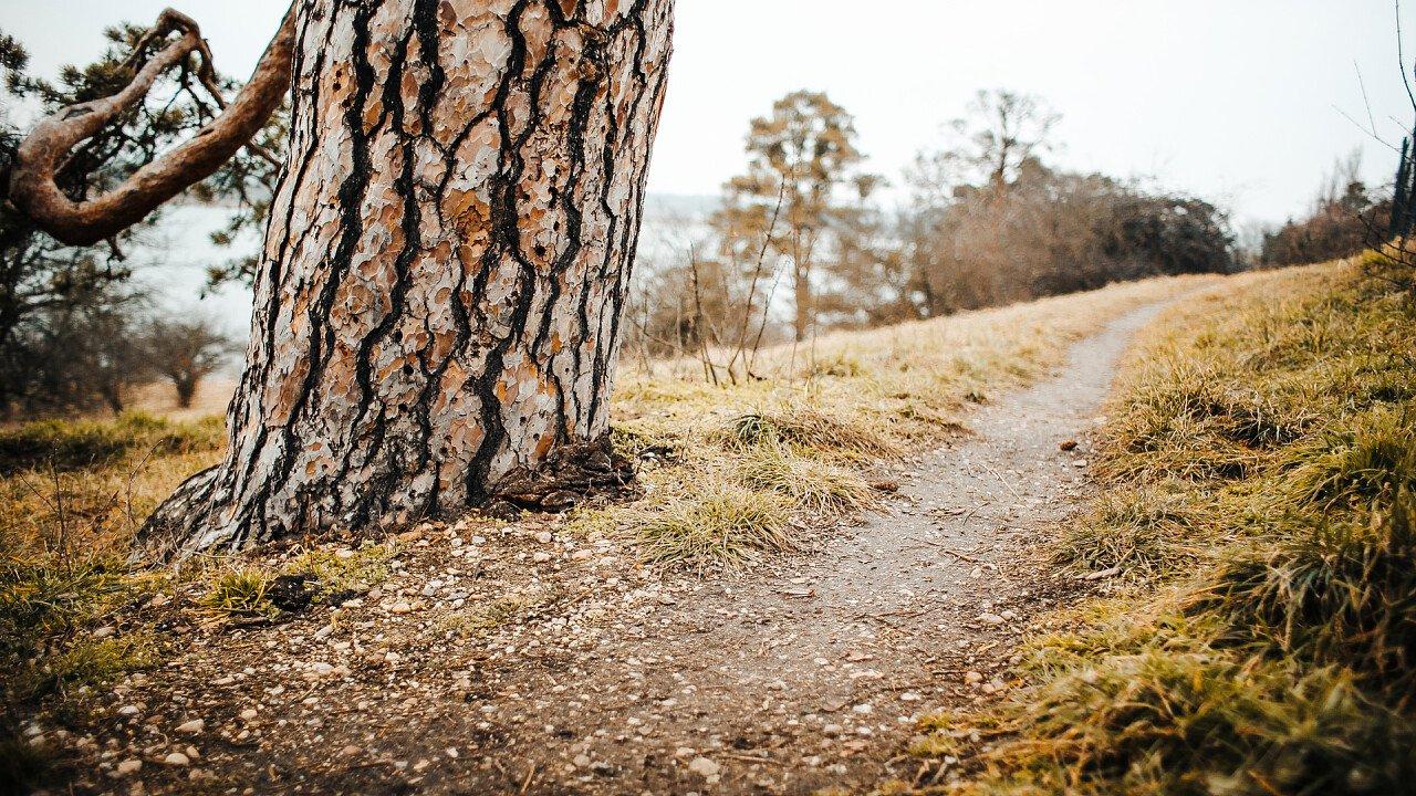 sentiero_albero_picjumbo