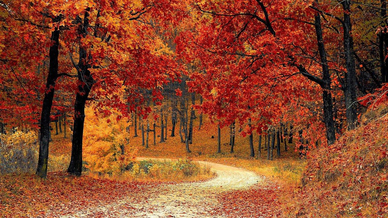 foresta_autunno_pixabay_valiphotos