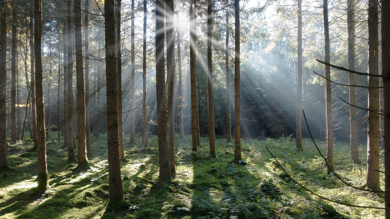 foresta_abete_rosso_pixabay_stux