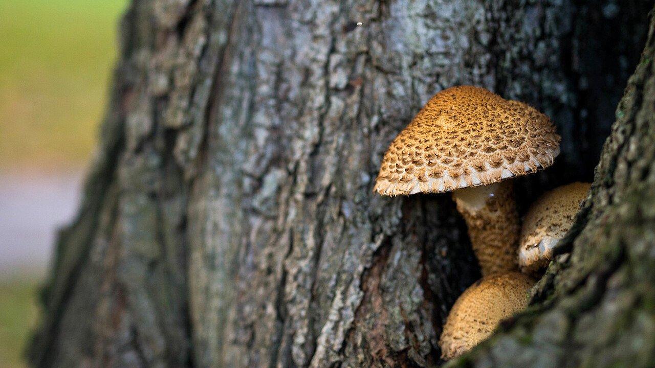 funghi_dentro_un_tronco_pixabay