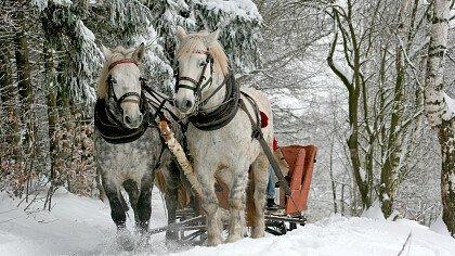gita_slitta_cavallo_inverno_depositphotos