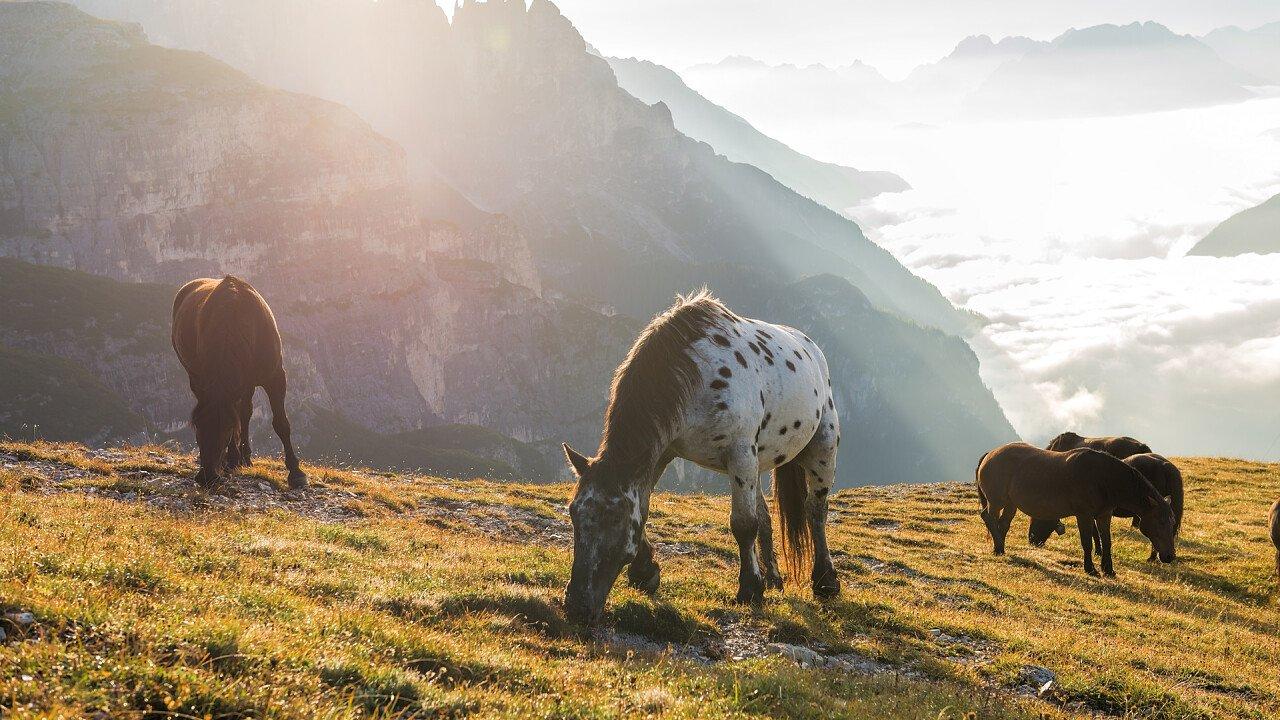 cavalli_al_pascolo_in_montagna_depositphotos