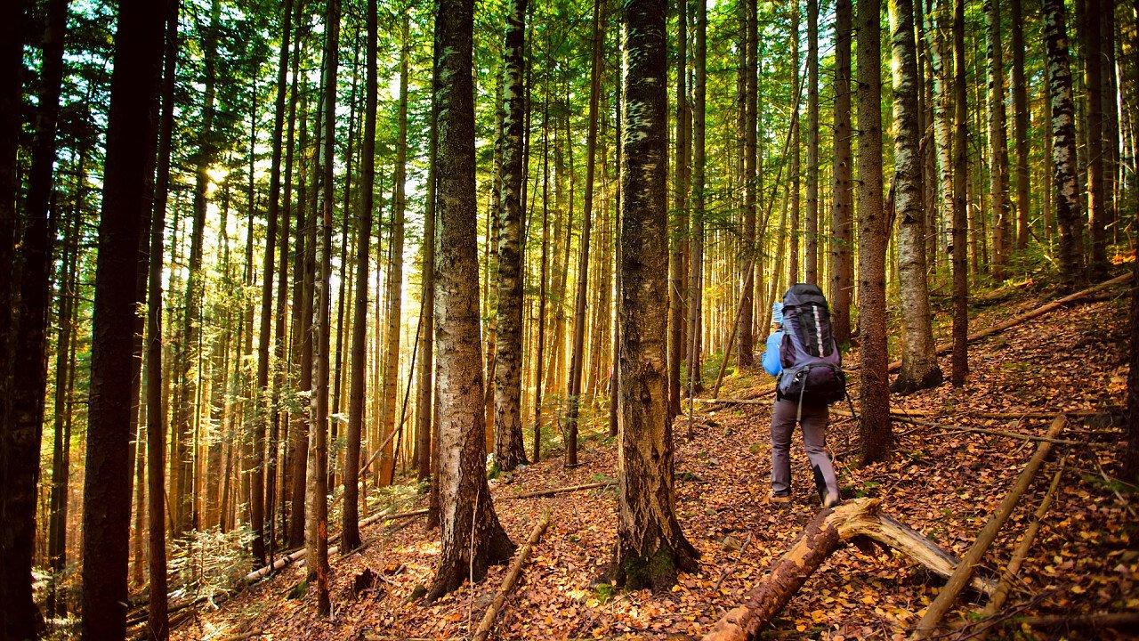 escursione_foresta_shutterstock
